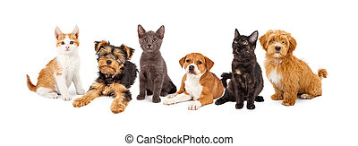 Row of Puppies and Kittens - A large group of young kittens...