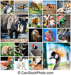 collage of animals - collage of beautiful colorful photos of...