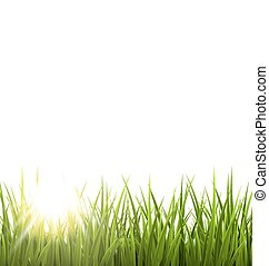 Green grass lawn with sunrise on white. Floral nature spring...