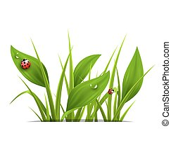 Green grass, plantain and ladybugs isolated on white Floral...