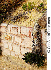 Retaining wall with an overhanging cactus growi