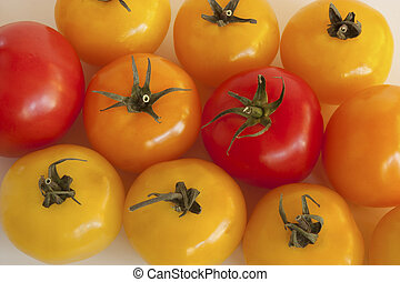 Absorbed Tomatoes - Absorbed Red, Yellow, Orange Tomatoes