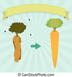 Rotten carrot - New carrot and rotten carrot with flies....