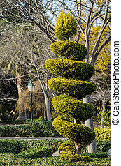 Topiary - Tall elegantly trimmed tree in a park