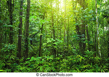 Dense forest - Tropical dense forest with morning sunlight...