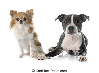 wto puppies - two puppies in front of white background