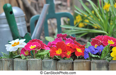 pansies in border - wooden border with colorful pansies and...