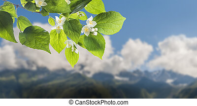 Flowers on branch