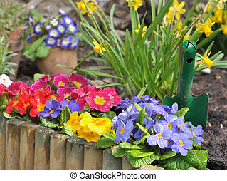 flowersbed of pansies and narcissus behind a wooden border