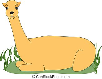 Llama - Illustration of a llama sitting in grass
