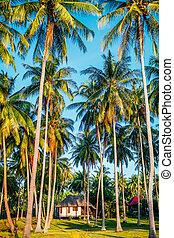 Koh Phangan - idyllic view in Phangan island, thailand