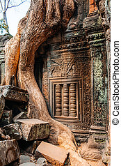 temple Ta Prohm - Ancient temple complex Ta Prohm, Siem...