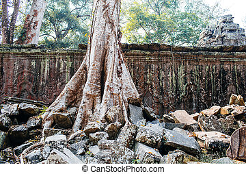 Ta Prohm temple - Ancient temple complex Ta Prohm, Siem...