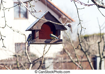 birdhouse on a tree branch with two tit