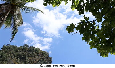 clouds drift above palm in tropics - white beautiful clouds...
