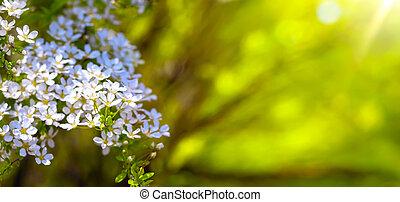 flor, primavera, borda, fundo