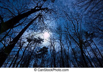 Dark Forest - Deep dark forest in the evening with leafless...