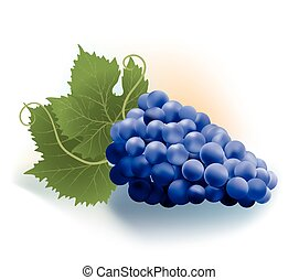 grapes and leaves