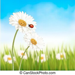 Nature spring daisy flower with ladybug. Vector illustration.