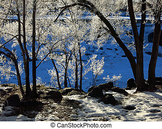 Frozen Trees Blue Background Winter Cold