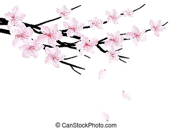 Spring background with blossom brunch of sakura. Vector