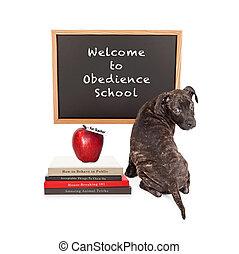 Asistir, escuela, perrito, obediencia