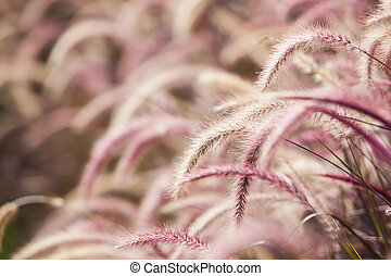 A flower of weed grass with the sun light