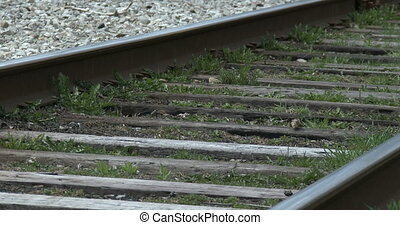 Tracks beside Transcanada trail - Railway tracks beside...