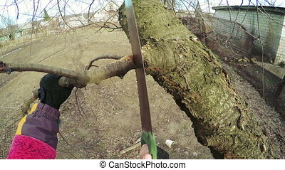 Pruning trees - Man cuts sawing trees and scissors