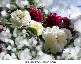 White roses and pink peonies bokeh