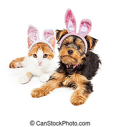 Easter Bunny Yorkshire Puppy and Kitten - Cute puppy and...