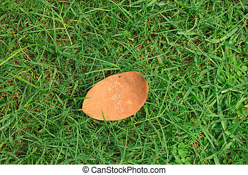 Color photo of autumn leaves fallen on green gras