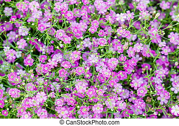 Background of little pink flowers blooming bush