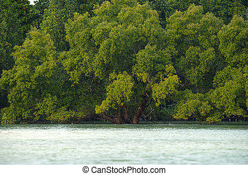 Mangroves - Scenic mangrove forest with lush foliage and...