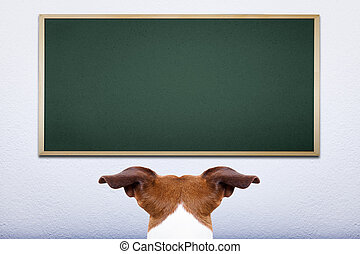 dog at school - jack russell dog in front of blackboard,...