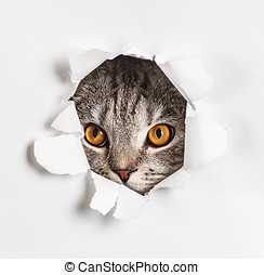 Cat looks through a hole in paper. Place on paper can be...