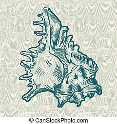 morze, shell., oryginał, Ręka, pociągnięty,...