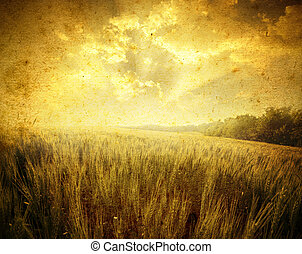 Field of wheat; vintage photo