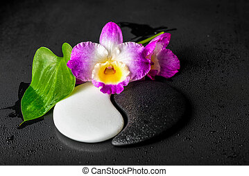 Yin-Yang symbol of stone texture with green leaf Calla lily...