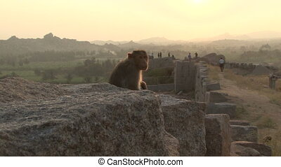India Karnataka monkey Hampi - India Karnataka Hampi. The...
