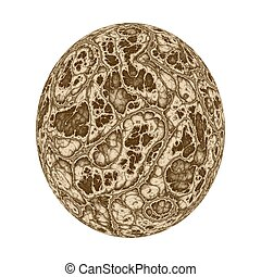 Brown dinosaur egg - Digitally generated dino egg with the...