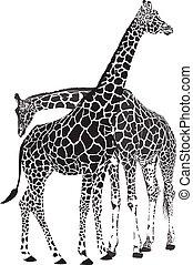 Giraffes - giraffes - black vector graphics isolated on...