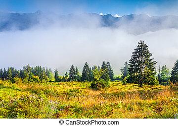 Foggy summer morning in the Triglav national park, Slovenia,...