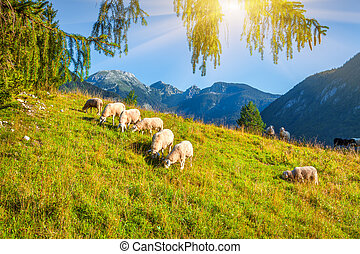 Alpine pastures in the Slovenian Julian Alps Triglav...