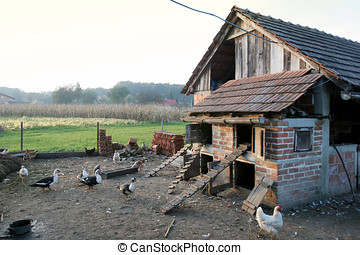 Hen house - A group of hens, roosters and ducks walking in...