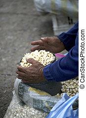Market- Ecuador - Person\'s hands on maiz (corn) at...