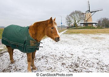 Winter horse in Dutch landscape