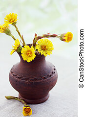 coltsfoot, spring flowers in a small ceramic vase