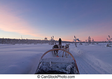 Husky ride at sunset - Husky sledge ride at sunset in winter...
