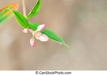 pink flower bud and green leaves